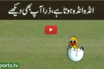The amazing video of the PSL duck