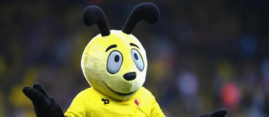 Allardyce upset at behaviour of Watford's hornet mascot
